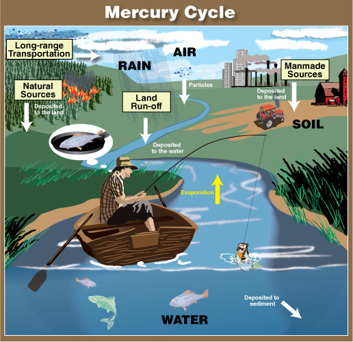 Health eat fish for health mercury in fish what you for How does mercury get into fish