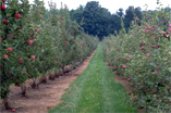 Ken Speirs Orchards in Caledon